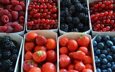 Owoce leśne – walory zdrowotne i pielęgnacyjne