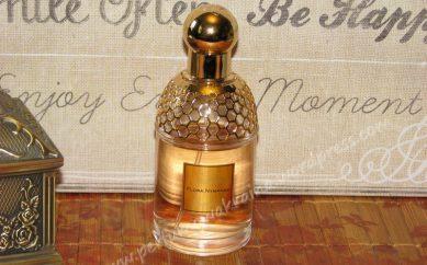 Przegląd luksusowych marek produkujących zapachy — od E do G