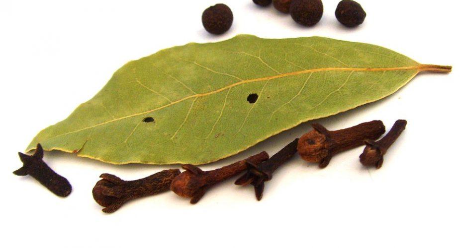 Właściwości i zastosowanie liścia laurowego