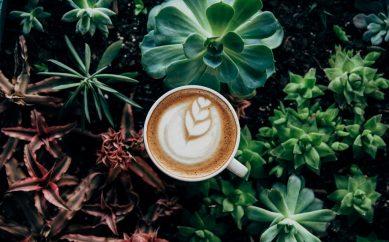 Degustacja kawy, czyli kilka słów o zasadach profesjonalnego Cuppingu