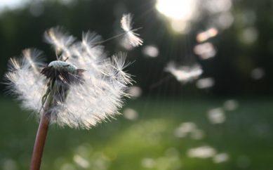 Czym jest alergia i jak sprawdzić, na co jest się uczulonym?