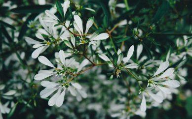 Kosmetyki Baikal Herbals — kosmetyczna podróż po Rosji