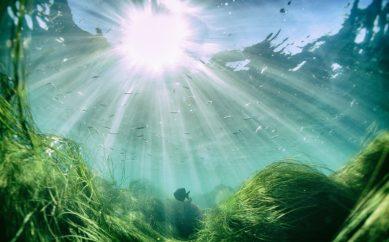 Algi — bogactwo mórz i oceanów w codziennej pielęgnacji
