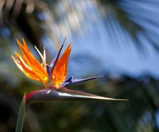 Mało znane i egzotyczne kwiaty w perfumach